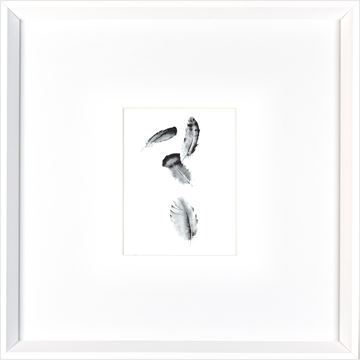 Picture of Four Feathers  - White