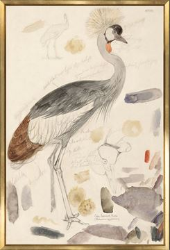 Picture of Lear - South African Crowned Crane - Large