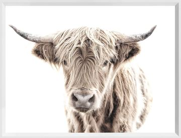 Picture of Mod. Farm - Highland Cow - Mini - White