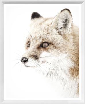 Picture of Mod. Farm - Red Fox - Mini - White