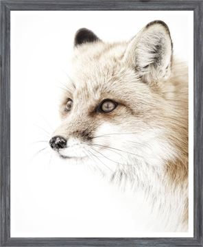 Picture of Mod. Farm - Red Fox - Mini - Grey