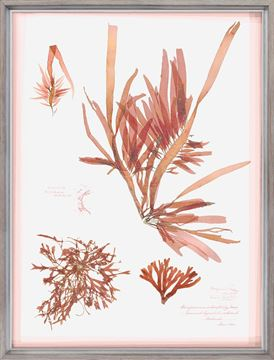 Picture of Coral Pressings II - Large