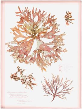 Picture of Acrylic - Coral Pressings I