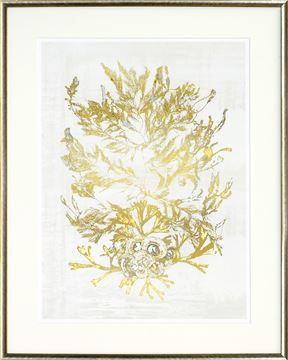 Picture of Pressed Seaweed - Gild I