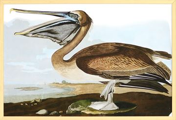 Picture of Audubon - Brown Pelican