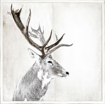 Picture of Stag Portrait
