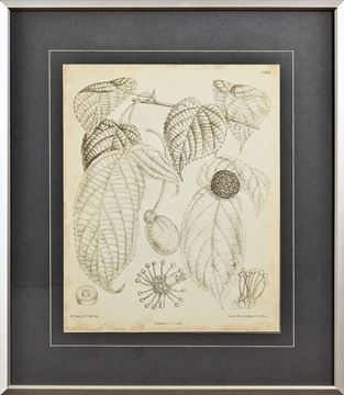 Picture of Vintage Curtis Botanical III