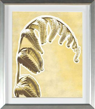 Picture of Honey Gold - Weeping Frond (Large)