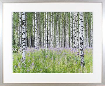 Picture of Aspens In Violet II