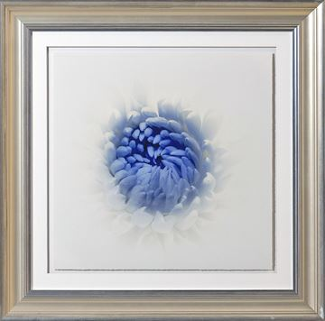Picture of Blue Focus, Floral V - A
