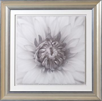 Picture of Sepia Focus, Floral V - A