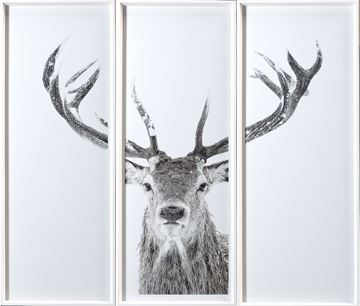 Picture of Stag - Triptych
