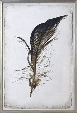 Picture of Feather Study IV