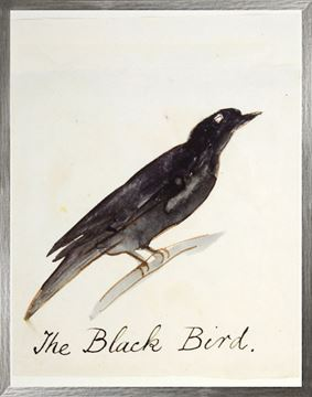 Picture of The Black Bird - Large
