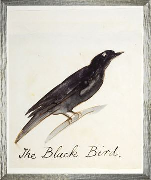 Picture of The Black Bird - Small