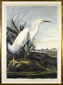 Picture of White Egret