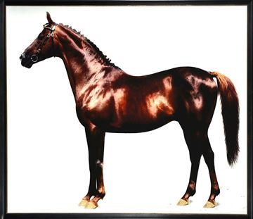 Picture of Trakehner Chestnut Stallion