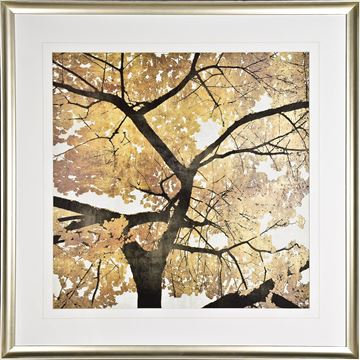 Picture of Golden Leaves