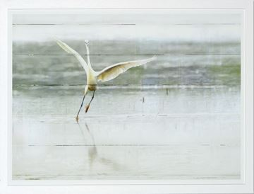 Picture of The Young Egret