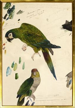 Picture of Lear - Two Parrots - Lrg