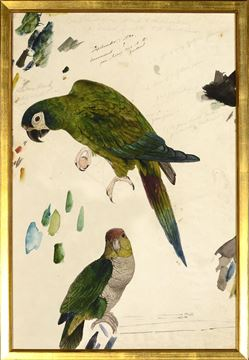 Picture of Lear - Two Parrots - Sml