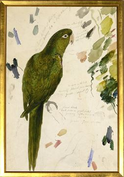 Picture of Lear - Vibrant Green Parrot - Sml