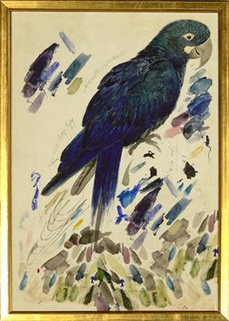 Picture of Lear - Blue Parrot - Sml