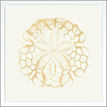 Picture of Sand Dollar Ivory - Gold