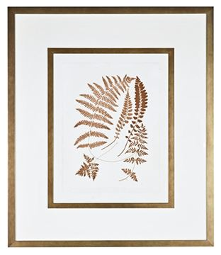 Picture of Sepia Ferns II