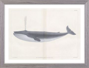 Picture of Vintage Whale Series I