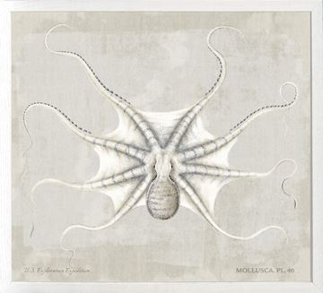 Picture of Mollusca Pl 46 (Sm)