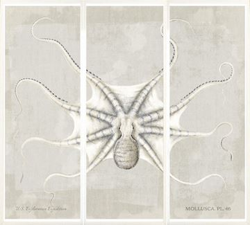 Picture of Mollusca Pl 46 Triptych