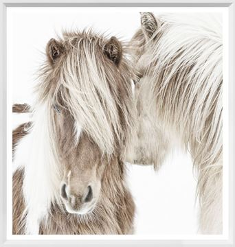 Picture of Mod. Farm - Icelandic Ponies - Mini - White