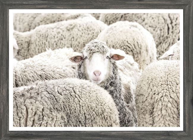 Picture of Mod. Farm - One in the Crowd - Mini - Grey