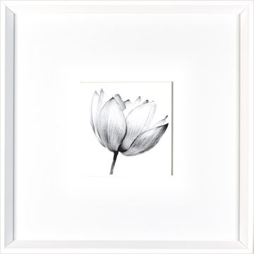 Picture of Magnolia  - White