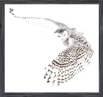 Picture of Mod. Farm - Snowy Owl - Mini - Grey