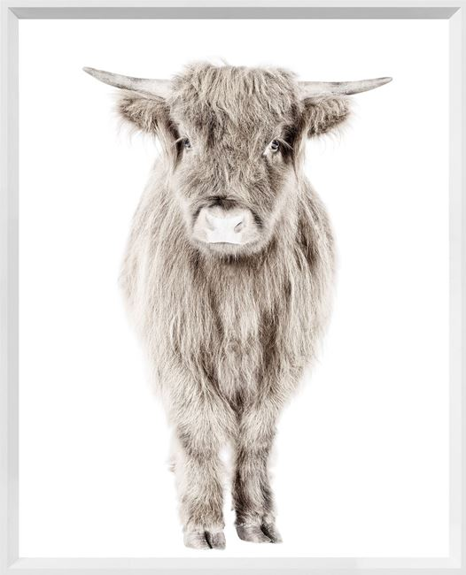 Picture of Highland Calf