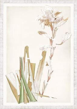Picture of Ruche Flora XIII