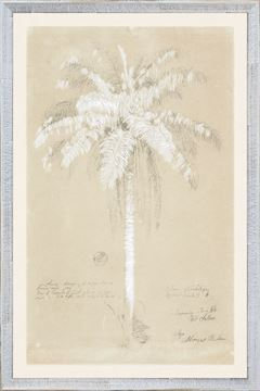Picture of Collection 08 - Royal Palm, Cuba 1885