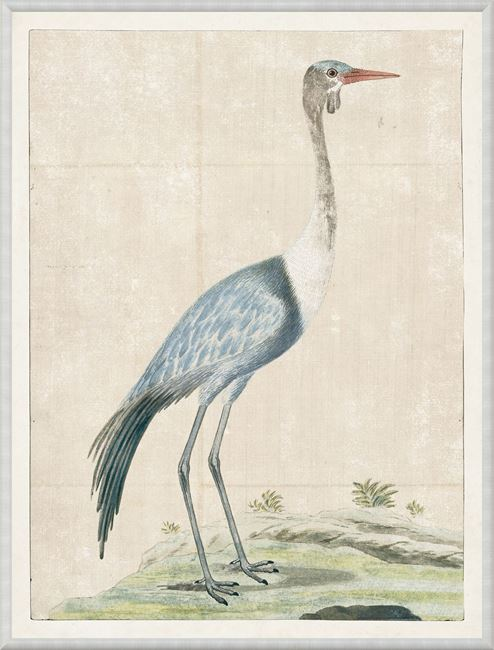 Picture of Gordon - Wattled Crane, 1778