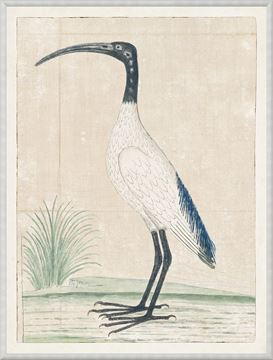 Picture of Gordon - African Sacred Ibis, 1778