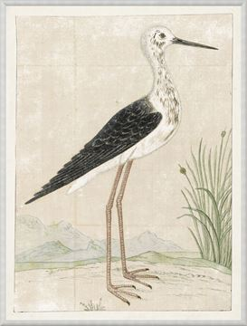 Picture of Gordon - Black Winged Stilt, 1778