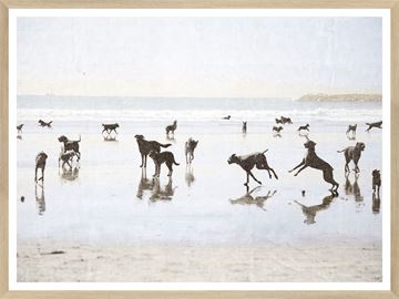 Picture of Dogs Day at the Beach - Small