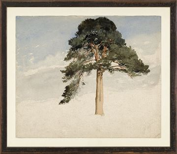 Picture of Collection Vintage - Scottish Fir Tree, 1849 - Small
