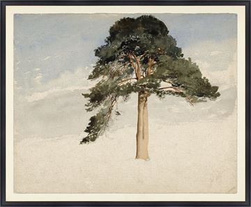 Picture of Collection Vintage - Scottish Fir Tree, 1849 - Large