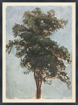 Picture of Collection Vintage - Tree Study, 1855 - Large